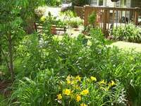 bee balm and day lilies